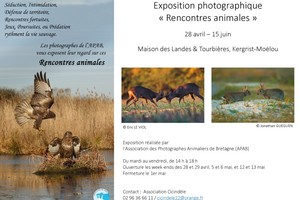 "Exposition photographie ""Rencontres animales"""